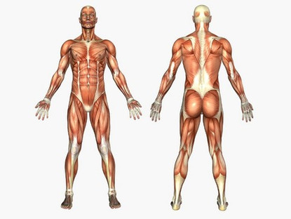 Sistema muscular: problemas médicos comunes