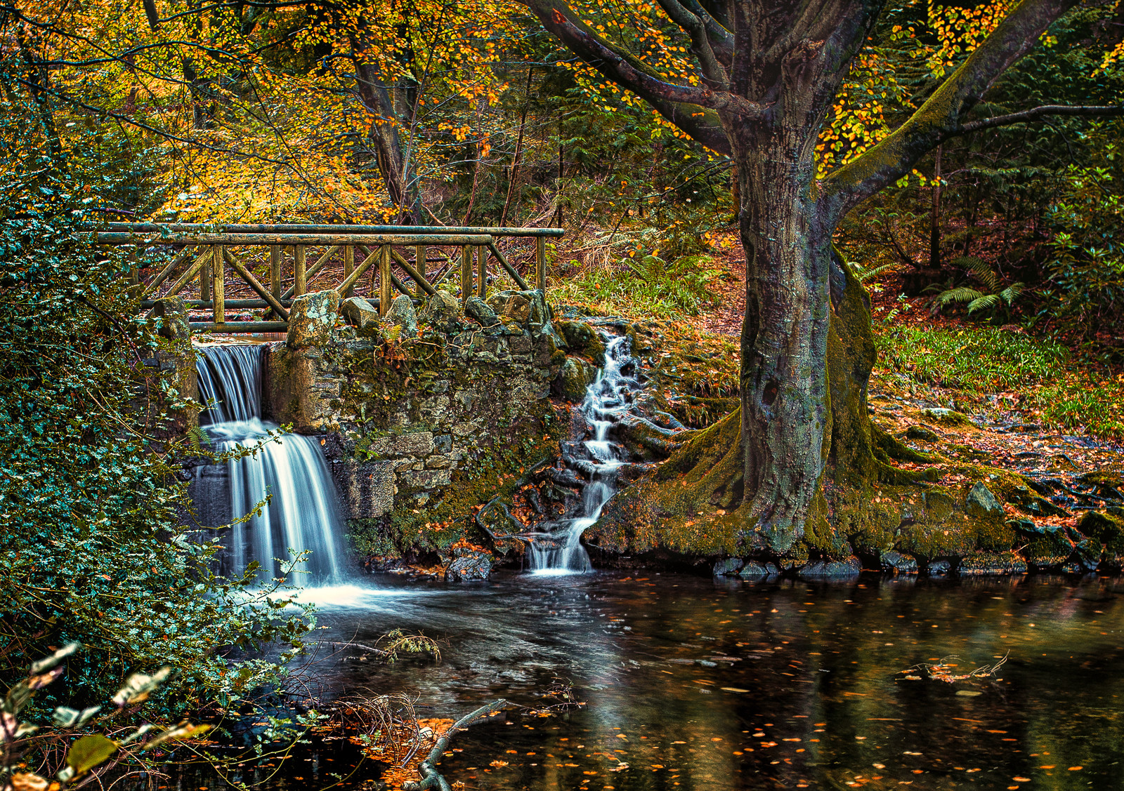 'Tollymore' by Terry Hanna (9 marks)  -  Ballynahinch Camera Club
