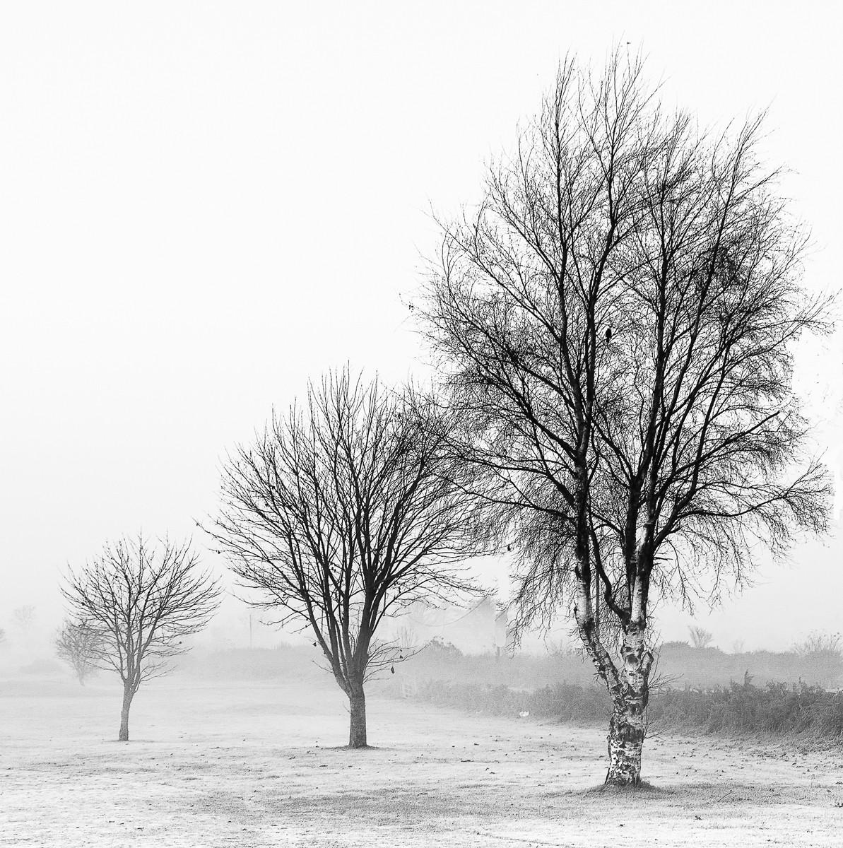 MONO - Frozen Birch by Alan Chowney (11 marks)