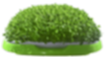 110_clipped_rev_1 (1).png