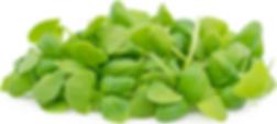 Italian Basil Microgreen.png