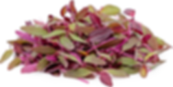 Amaranth Microgreen.png