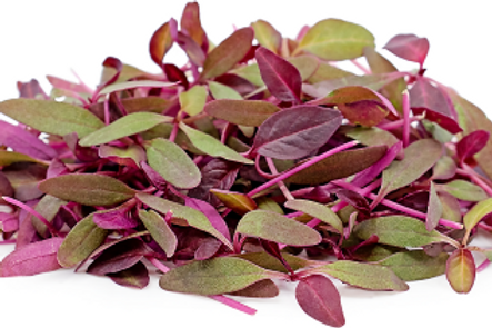 Amaranth Microgreen (R)