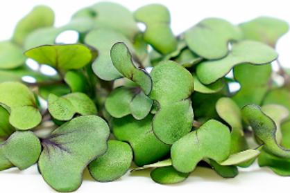 Cabbage  Microgreen (R)