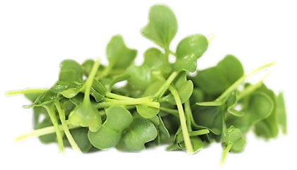 Broccoli Microgreen.png