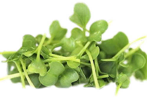 Broccoli Microgreen (R)