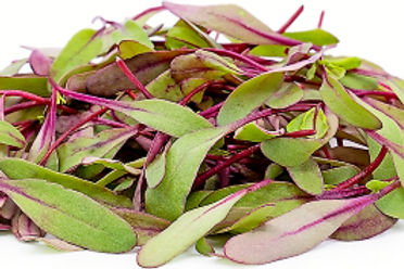 Beetroot Microgreen