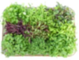 microgreens.jpg