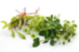 microgreens-1-1240x821.jpg