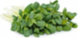 Sunflower Microgreen.png