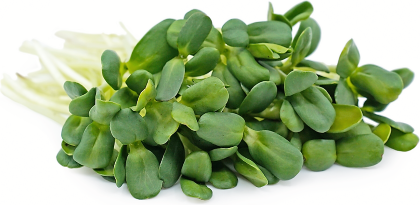 Sunflower Microgreen.png
