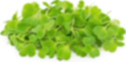 Arugula Microgreen.png
