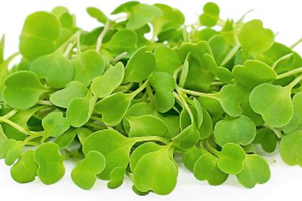Arugula Microgreen (L)