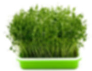 plants-growing-nursery-seeding-fodder-tr