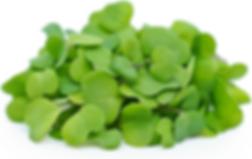 Kale Microgreen.png
