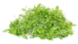 Mustard Microgreen.jpg