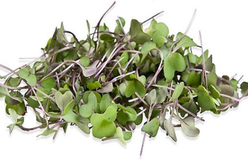 Kohlrabi Microgreen (L)