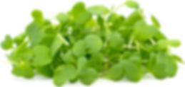 Wasabi Microgreen.png
