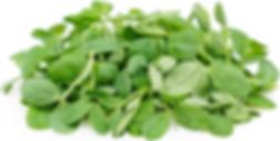 Pea Microgreen.png