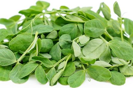 Pea Microgreen (R)