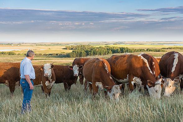 cattle management consultant.jpg