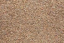 rye seed cleaning.jpg