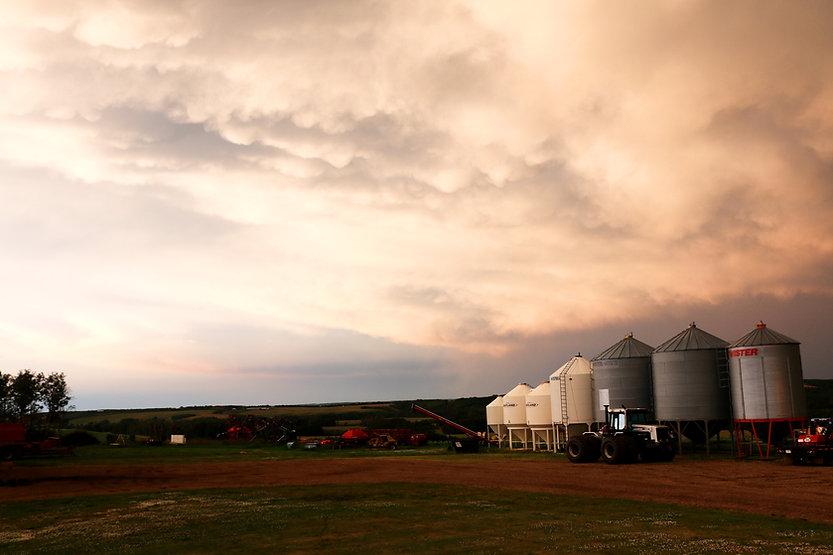 grains organic farm.jpg