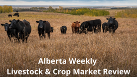 April 30, 2021 Weekly Livestock & Crop Market Review