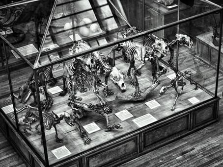 Warum KMU Dinosaurier sind - und 5 Tipps, wie sie sich doch noch vor dem Aussterben retten können