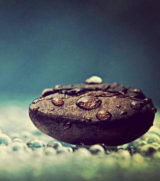 waterbean.jpg