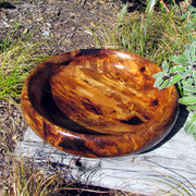 Bowl Swamp Kauri
