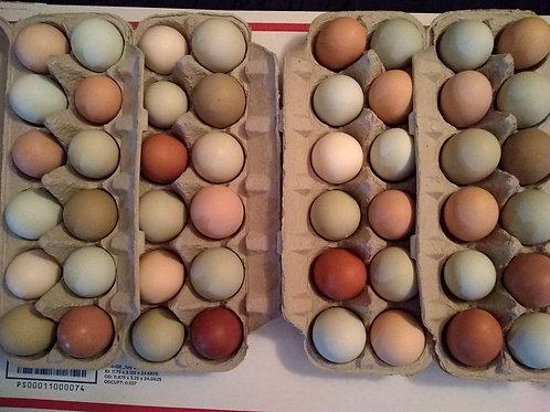 1 Dozen Rainbow colored Chicken Eggs, for eating- FARM PICKUP