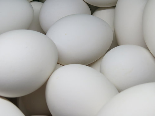 12 Fresh Small Goose Eggs (1 Dozen)- US SHIPPING