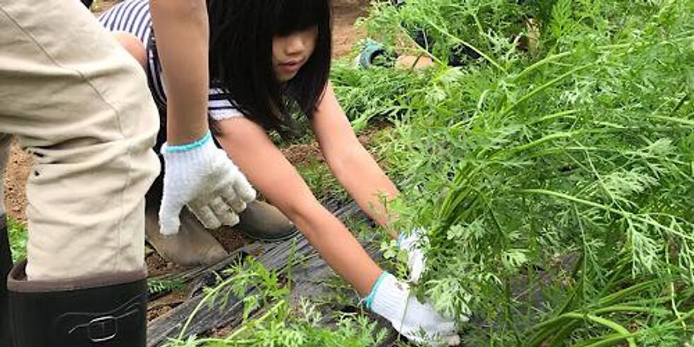 〜農家の方から学ぼう〜冬の野菜収穫と農業体験