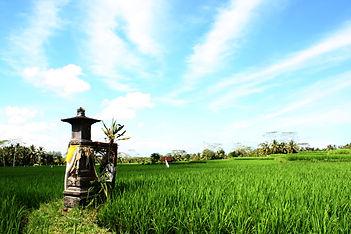 Copyrights Bali Wellness Retreat (3).jpg