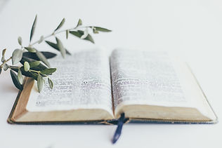 bible with olive branch