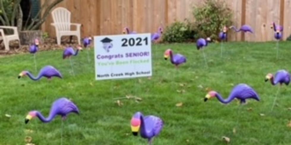 Flock A Senior