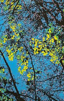 Sunlight on Leaves, Spring