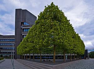 treereshaping.jpg