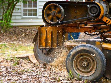 Stump Removal vs. Stump Grinding