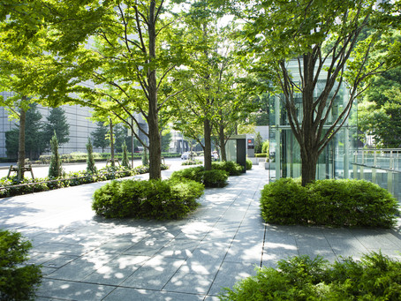 Commercial Tree Services Are Critical