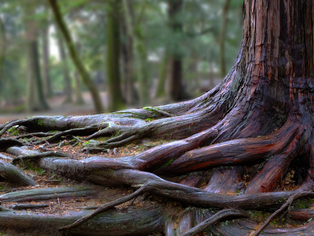 How to Take Care of the Roots of Your Tree