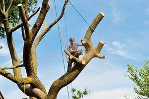 treetopping.jpg