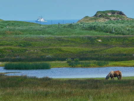 Now you can take a ship to Sable Island!