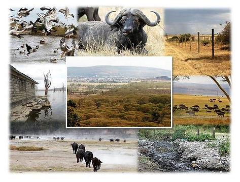 Lake Nakuru Biodiversity