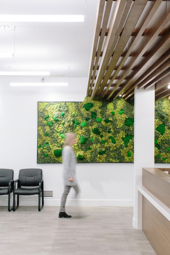 Prime Physiotherapy living wall