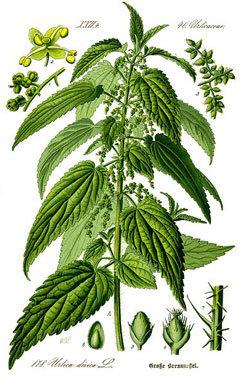 Kopriva (zel; glicerol)