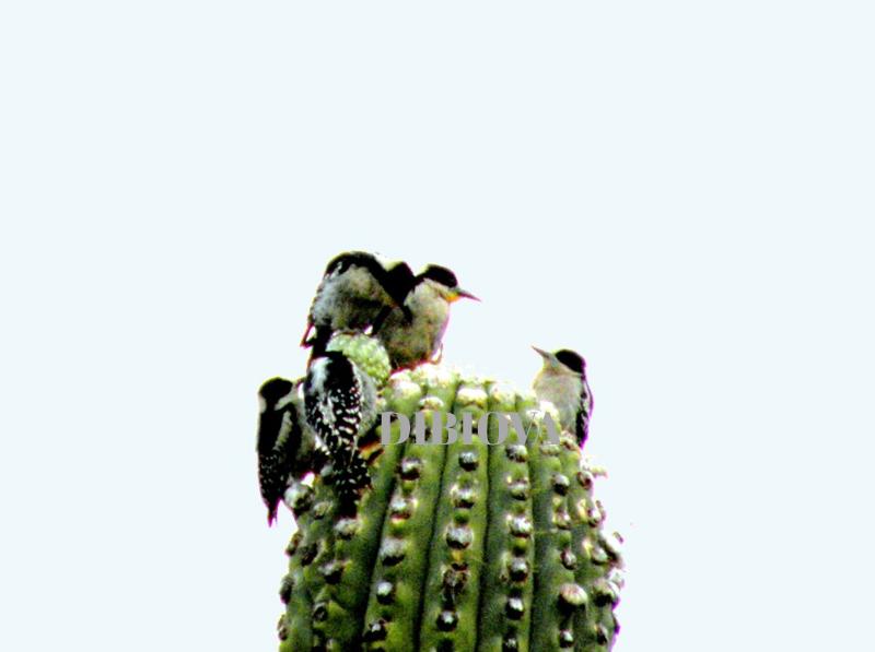 Aves - Publicaciones