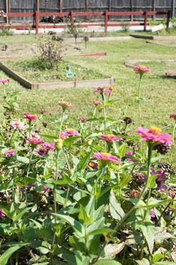 Jackson Hinds Gardens