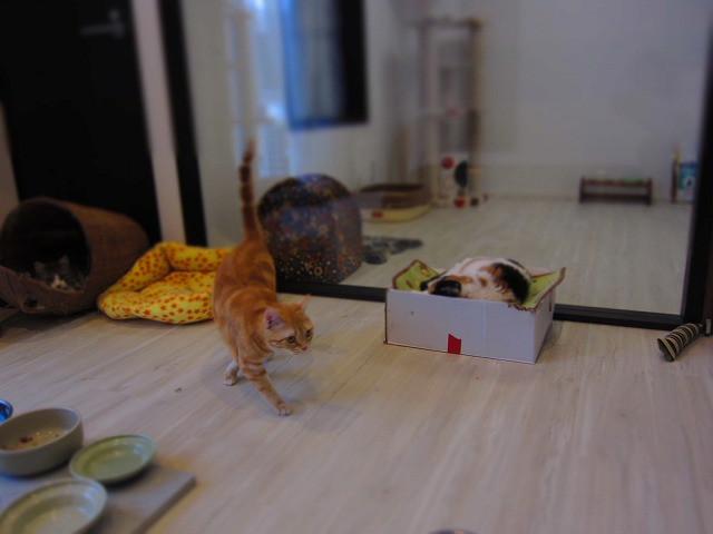 テレビ放映 CAT HOUSE(猫と暮らす家)
